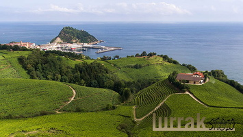 Wineyards-Txakoli-Getaria-Basque-Country-Spain