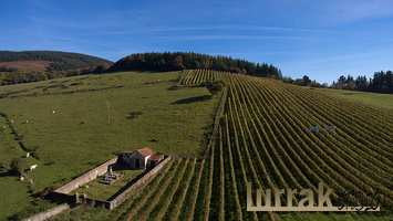 Cemetery-Vineyards-Sopuerta-Basque-Country-Spain